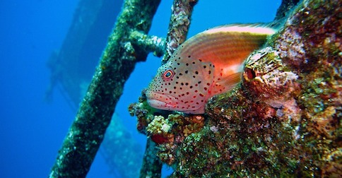 diving-694611_640