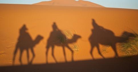 camels-897658_640